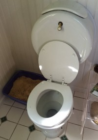 Toilet seat covers and toilet seat mold